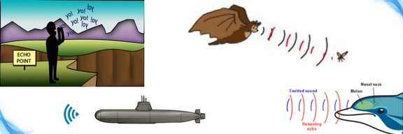 echo from a mountain, bat flying, submarine, dolphin