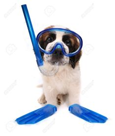 dog with snorkel, mask and fins