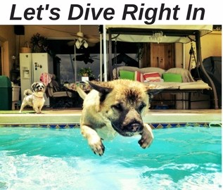 Dog diving into a pool